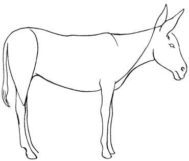 draw a donkey