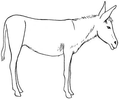 draw donkeys
