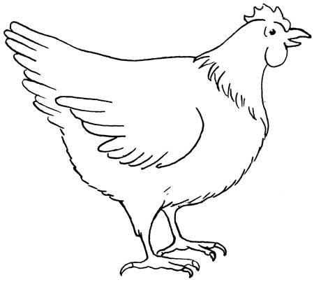 Chicken Drawing