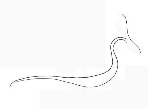 How to Draw a Dragon Perfectdragon4-3