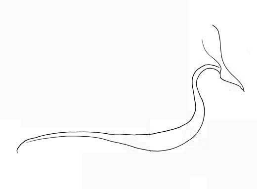 How to Draw a Dragon Perfectdragon4-4